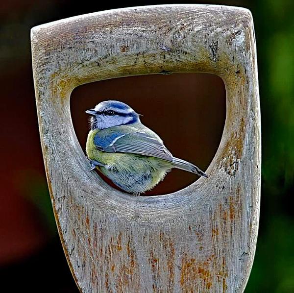 Framed Bluey by stokesy
