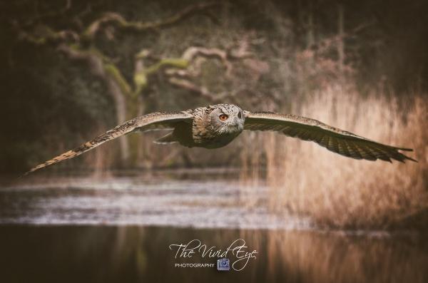 Airborne by MartinWait