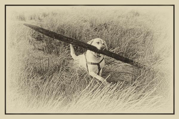 Fetch! by Toobi_Won