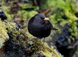 A common garden bird