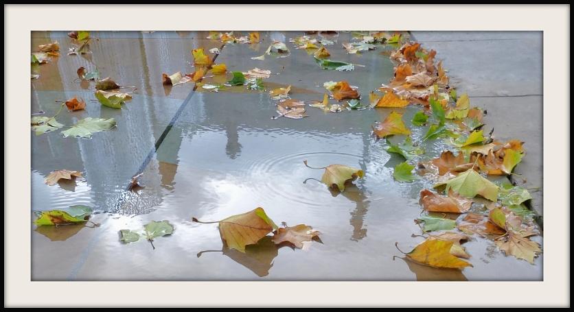 Mirror Pool