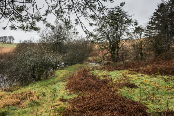Priddy wet and windy again by AdeDavis