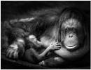 Motherhood Is Black & White by capto