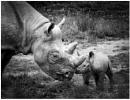 Motherhood Is Black & White 2 by capto