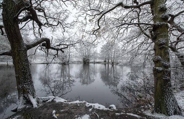 Cool Winter by Alffoto