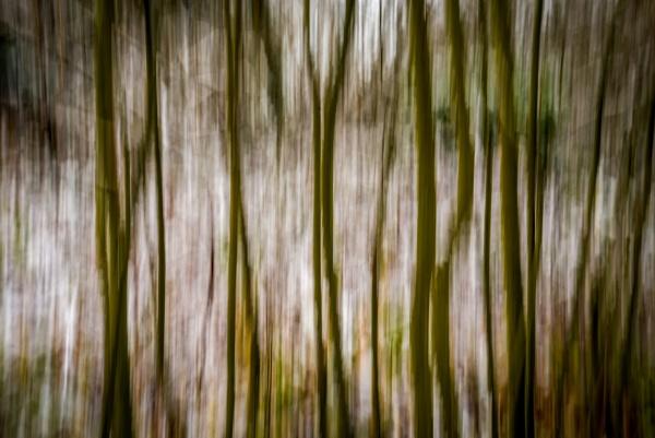 Winter Woodland ICM by falsecast