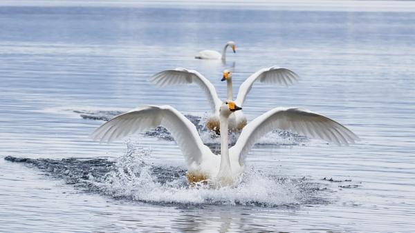 Landing by hannukon