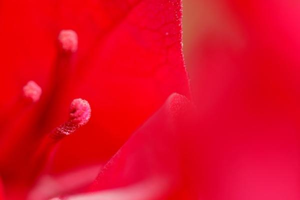 Focus on Red by Savvas511