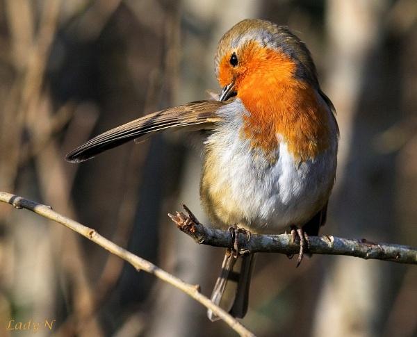Do my armpits smell? by ladynewbury