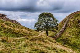 Sycamore Gap Hadrians Wall