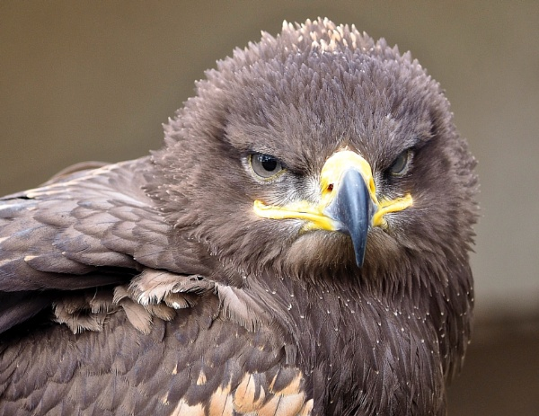 Angry bird by athos55