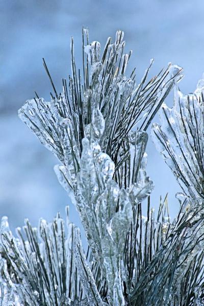 Ice Storm by Joline