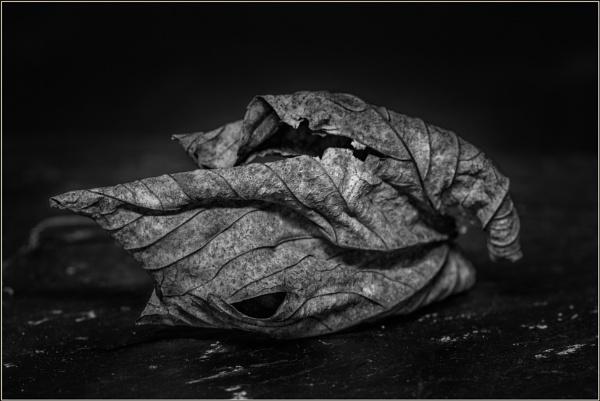Leaf XX by optik