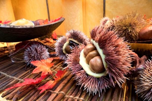 Sea Urchin by manicam