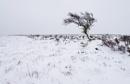 Lone Tree by Trevhas