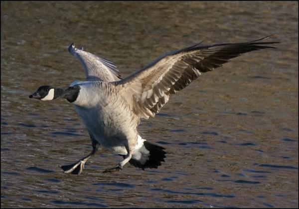 Landing by civitas