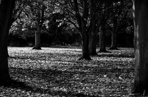 Trees by Nikonuser1