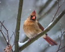 Mrs. Cardinal by taggart