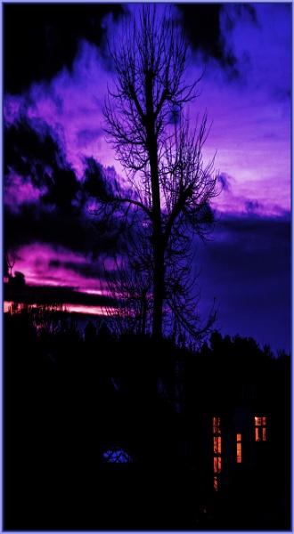 purple in the west by estonian