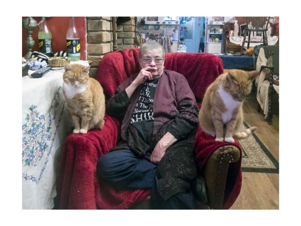 Some Cats by JeffHubbardPhotography