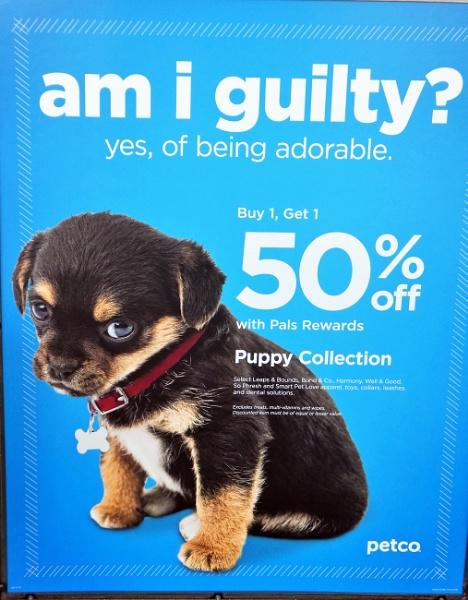 *** Am I guilty  ? *** by Spkr51