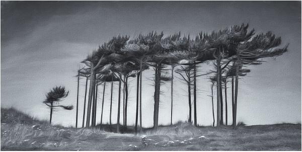 Windblown by Leedslass1