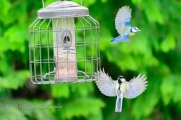 Birds playing:-)