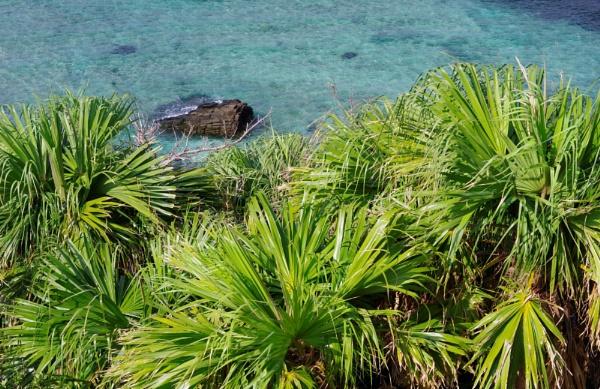 JAPAN - Coastal Landscapes No.64 by PentaxBro