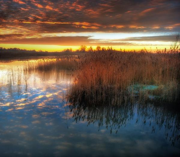 Oulton Marsh by chris-p