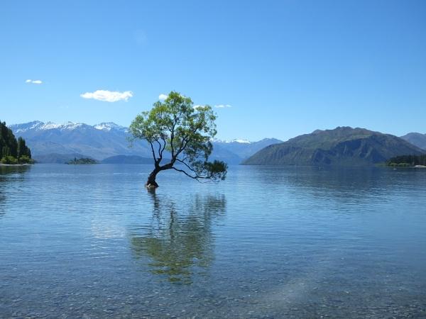 Wanaka Tree - Lake Wanaka New Zealand by patrickmcnally