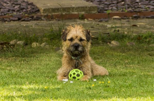 Bonham and his ball