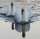 Mirror Image by SUE118