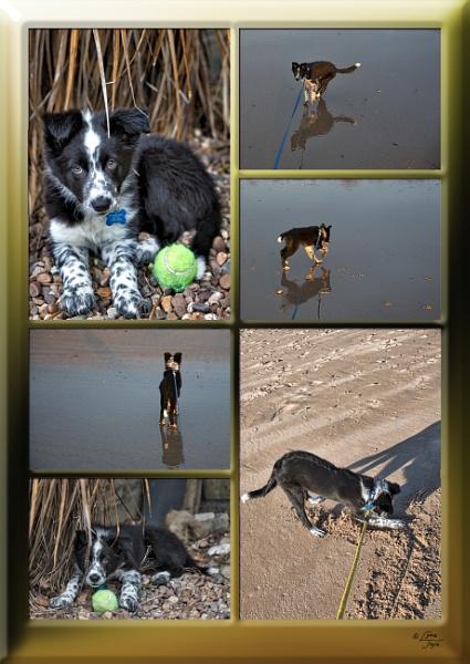 Photomontage Fun by LynneJoyce