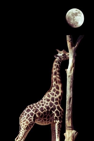 Hi Moon by xGei8ht