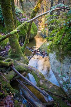 Jungle like at Sidobre