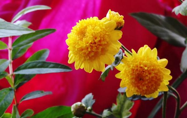 Flower-Twins