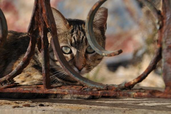 Puss & Rust... by Chinga