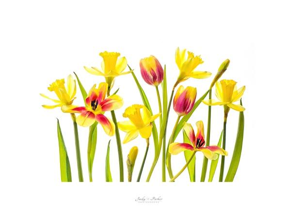 Springtime by jackyp