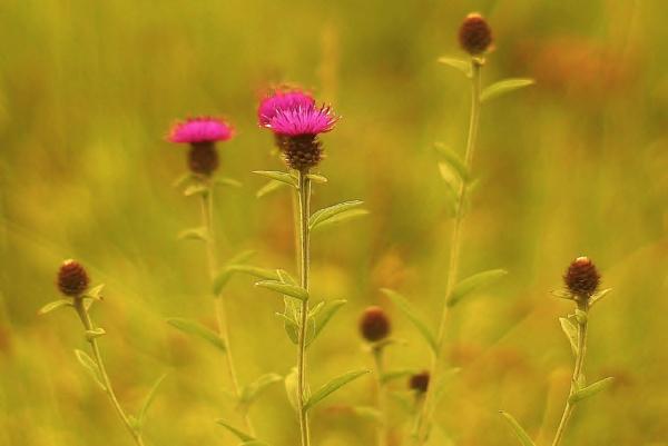 Summer meadow by georgiepoolie