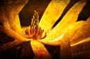 Inner Glow by akh