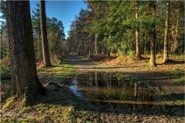 Woodland Path - Ufton Nervet
