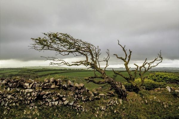 Wheres Heathcliffe? by markjnorris