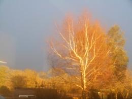 amazing stormy sky with brilliant evening sun