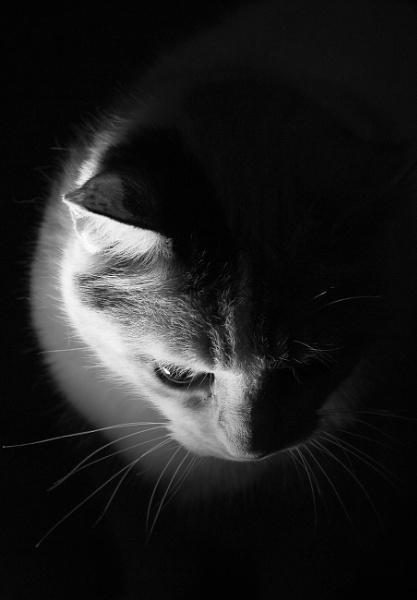 Cat in the Spotlight by Malfun