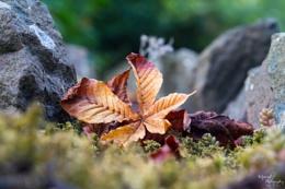 A return to autumn