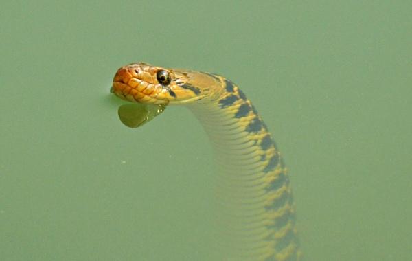 Killer in water