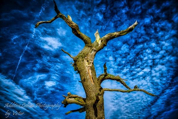 Tree by Sambomma