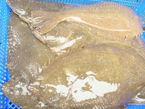 Seoul Fish Market Stall 2 by PhotoHeritage
