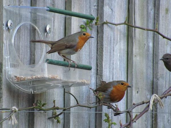2 robins