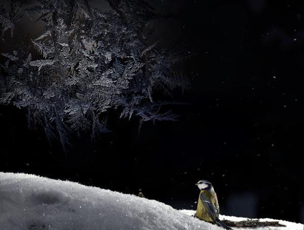 BLUE PENGIUN by maratsuikka